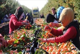 Tarım iş gücü rakamları: Kadına 53 erkeğe 66 TL