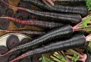 Siyah havuçta hasat heyecanı
