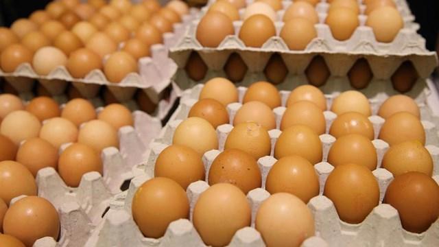 Türkiye, yumurta krizini izlemeye aldı