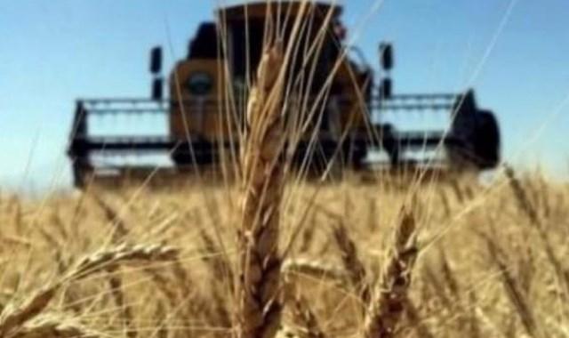 Ukrayna dan Türkiye ye buğday önerisi