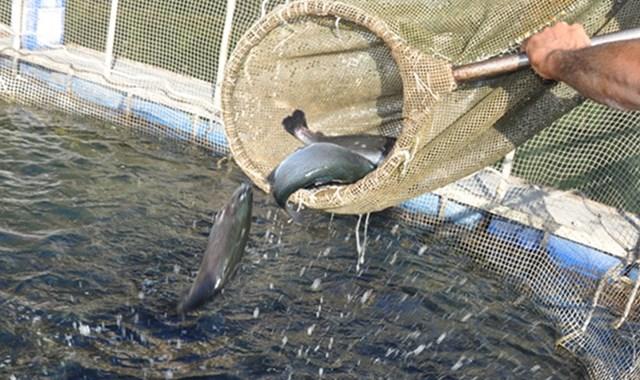 Su ürünleri yetiştiricilerine iyi tarım desteği