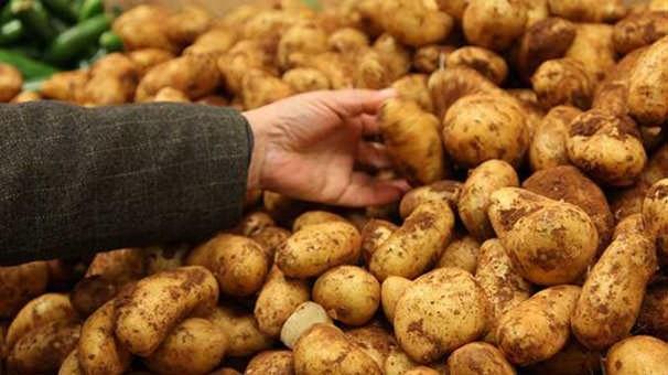 Dikkat! Patates zehirleyebilir