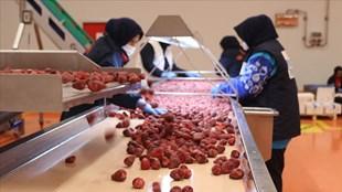 Dondurulmuş meyve sebze ihracatında hedef 250 milyon dolar