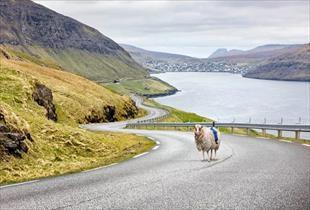 Google koyunları Street View için kullanıyor
