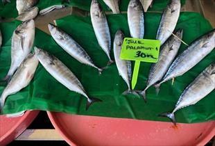Tezgahlar balık doldu, işte ilk fiyatlar