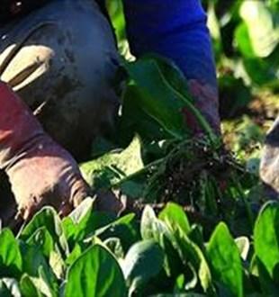 Kadınlara ve çiftçilere yönelik uluslararası fonların kilidini  kooperatifler  açacak