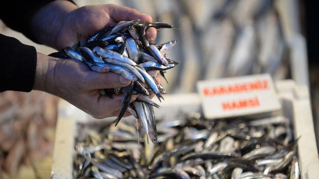 Karadeniz alarm veriyor: 20 yıldır böylesi görülmedi
