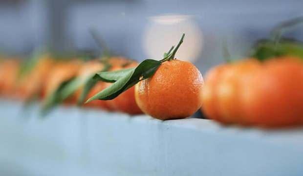 Rusya ya en çok mandarin ihraç edildi
