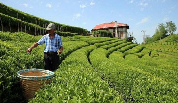 Çay üreticisine koronavirüs çağrısı
