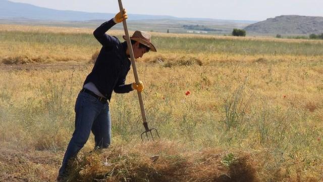 Çiftçinin yeni alternatifi verim rekoru kırdı