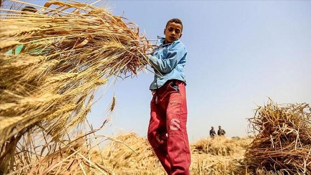 Bakanlık, çocuk işçiliği ile mücadelede yeni bir proje başlatıyor