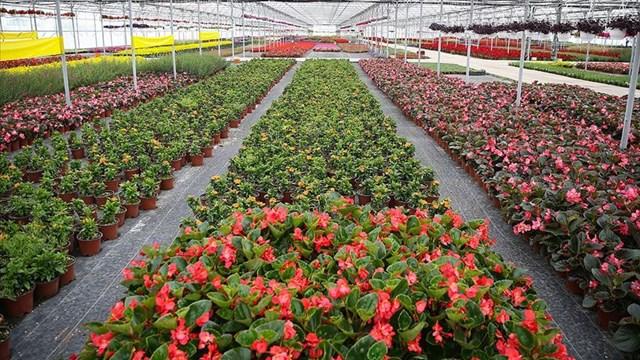 Süs bitkileri ihracatı salgında arttı