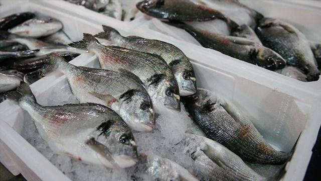 Su ürünlerinde ihracat rekora koşuyor